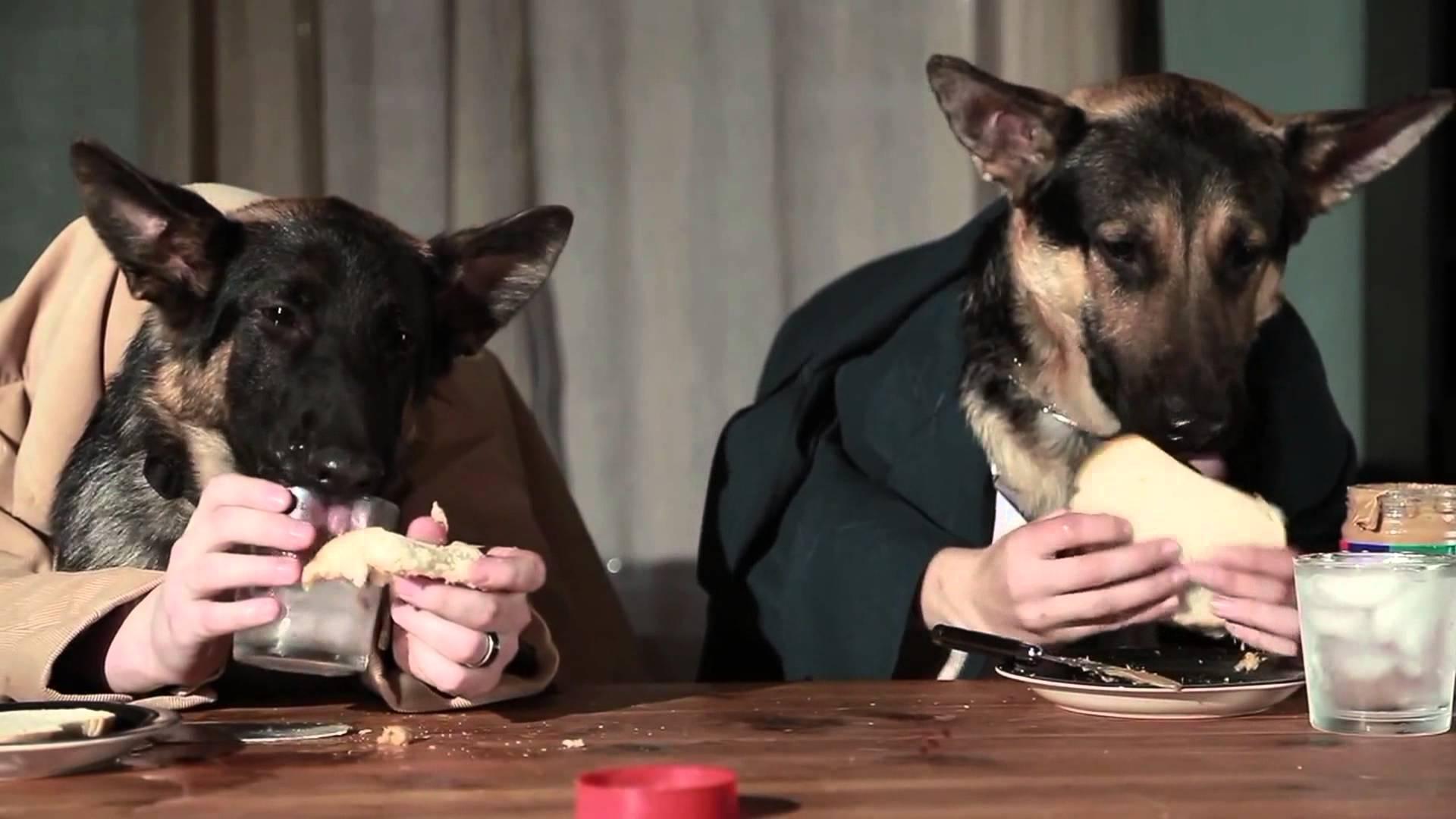 Crocchette per cani, anche la sua alimentazione è importante