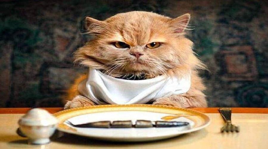 Gatti e cibo umido: errori da evitare