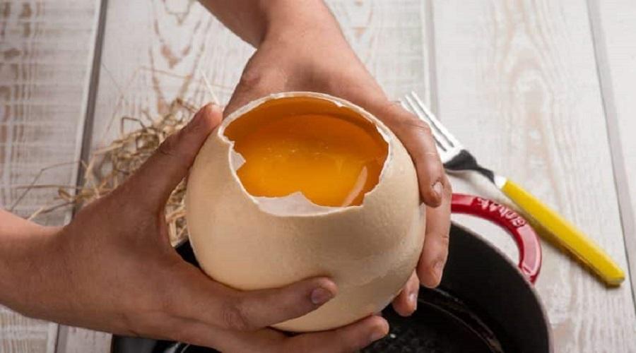 Perché l'uovo di struzzo è così rinomato